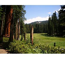 Green Meadow in Sequoia National Park Photographic Print