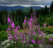 A Pink Moment by Charles & Patricia   Harkins ~ Picture Oregon