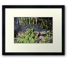 Gator Man  Framed Print