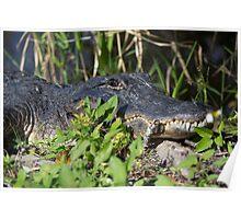Gator Man  Poster