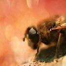 Bokeh Bee by Pancake76