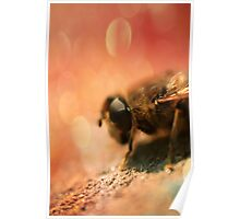 Bokeh Bee Poster