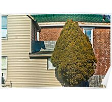 Evergreen in the Neighborhood Poster