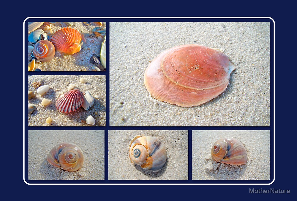 Sea Shells by MotherNature