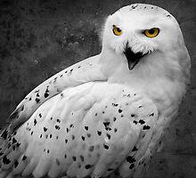 Snowy Owl Shrieks by EdPettitt