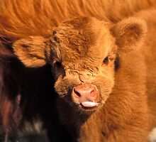 A Baby Shaggy Moo with Tongue Out by Reagan Pannell