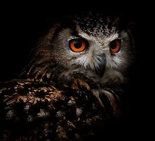 Eagle Owl with Orange Eyes by EdPettitt