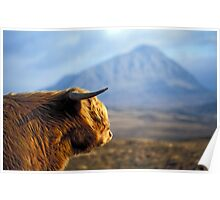Highland Cow with Ben Hope - Highlands of Scotland Poster
