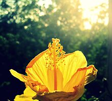Yellow Flower by LaurelMuldowney