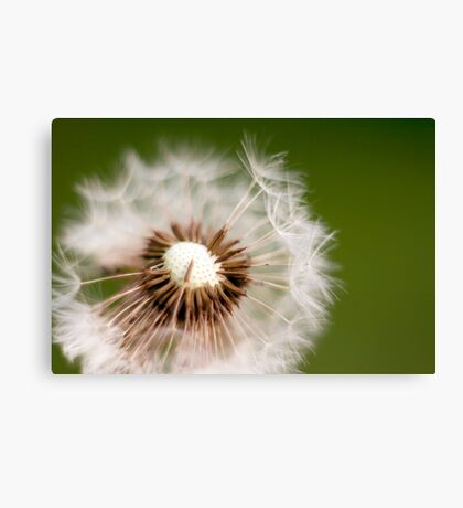 Make a Wish Dandelion Photography Canvas Print