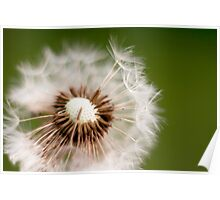 Make a Wish Dandelion Photography Poster