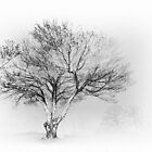 Tranquil Tree I - Blue Ridge Parkway BW by Dan Carmichael