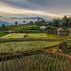 The Rice Terraces of Y Ty by Peter Hammer