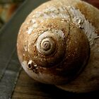 The Perfect Snail Shell by LaurelMuldowney