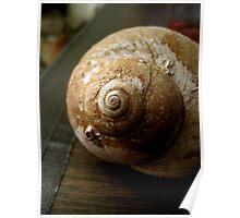 The Perfect Snail Shell Poster