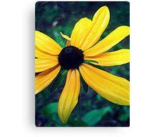 Gore Mountain Flower Canvas Print