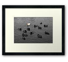 Duck Duck Goose Framed Print