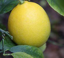 1st Photo of 2013-Lemon by heatherfriedman