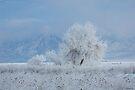 Winter tree by Nicole  Markmann Nelson