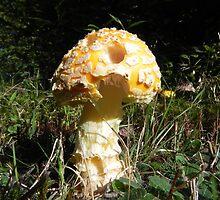 Golden Mushroom by Martha Medford