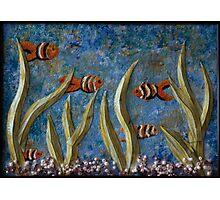 Tranquil Aquarium Photographic Print