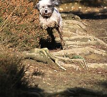 Macy Leaping by Christopher Lloyd