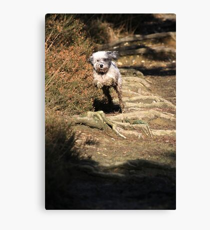 Macy Leaping Canvas Print