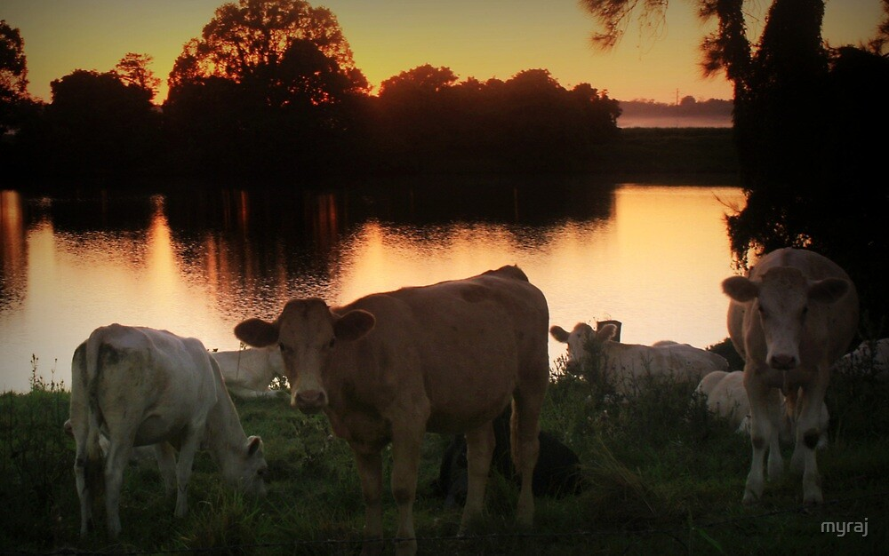 Paddock by the Clarence River by myraj