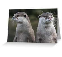 Compare the otters, dot com. Greeting Card