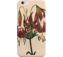 Turk's-cap Lily-Available As Art Prints-Mugs,Cases,Duvets,T Shirts,Stickers,etc iPhone Case/Skin