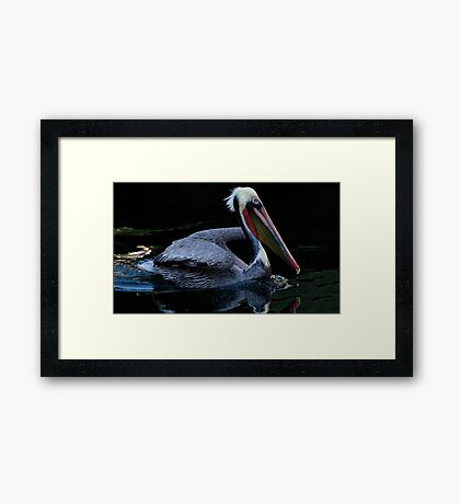 Smooth Swimming Framed Print