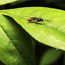 Wasp (unknown) by Colin  Ewington