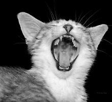Hear my roar by Heather King