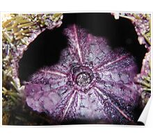 Inside a Sea Urchin Poster
