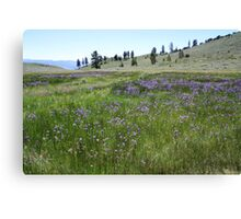 Field of Purple Wildflowers,Peavine Mountain,Reno Nevada Canvas Print