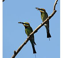 My Honey and A Bee ~ Bee Eaters ~ Photographic Print