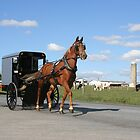 Amish Horse and Carriage by Delmas Lehman