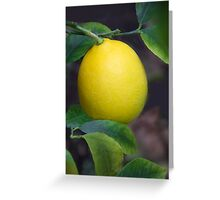 1st Photo of 2013-A Meyer Lemon! (01.01.13) Greeting Card