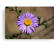 lone desert flower Canvas Print