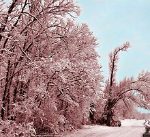 Southern Illinois Winter Scene 8_ Dec 2012 by michaelasamples