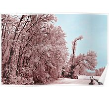 Southern Illinois Winter Scene 8_ Dec 2012 Poster