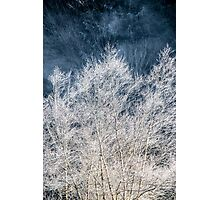 Frosted Trees Photographic Print