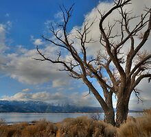 Lonely Old Tree by Dianne Phelps
