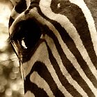 Eye of the Zebra by NestToNest