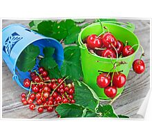 Cherries and currants Poster