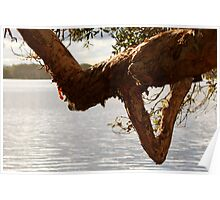 Lake Ainsworth - Lennox Head NSW Poster