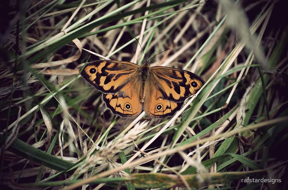 Butterfly #1 by rafstardesigns