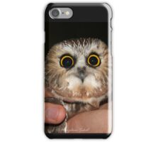 Northern Saw-whet Owl iPhone Case/Skin