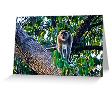 SHADY MONKEY! Greeting Card