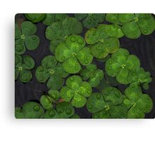 Water Lilly Zen Canvas Print